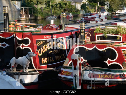 River Thames - moored narrow boats - brightly painted - traditional - sunlight - little dog 'on watch' - Stock Photo