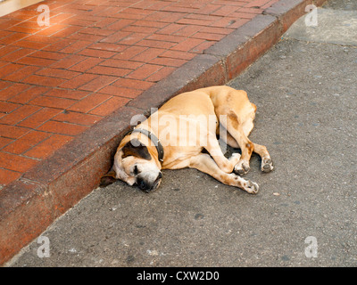 dormant dog diagonal, or let sleeping dogs lie.One of many lazy dogs in Buyukada Turkey - Stock Photo