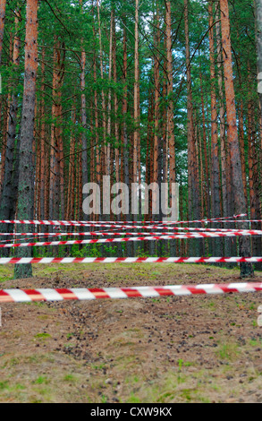 Directing tapes in the pine wood for sport competitions - 2. - Stock Photo