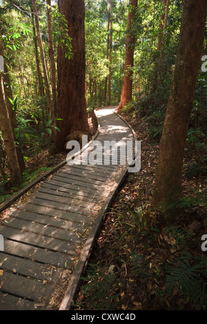 Sunshine breaking through forest onto wooden boardwalk in the Mary Cairncross Reserve Rainforest in Queensland Australia - Stock Photo