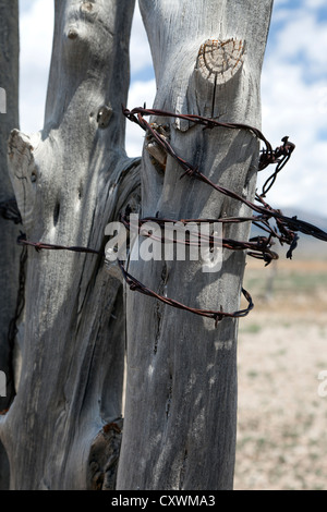 Fence post and barbed wire in eastern Nevada. - Stock Photo