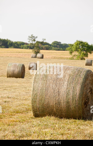 Hay bales in field - Stock Photo