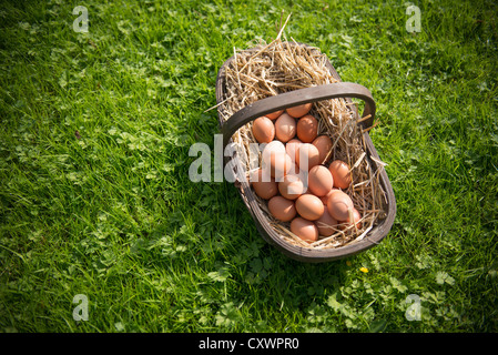 Basket of fresh eggs in grass - Stock Photo