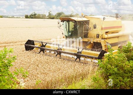 Thresher working in crop field - Stock Photo