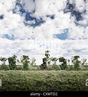 Shrubs growing in rural field - Stock Photo