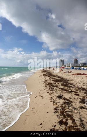seaweed washed up on miami south beach florida usa - Stock Photo