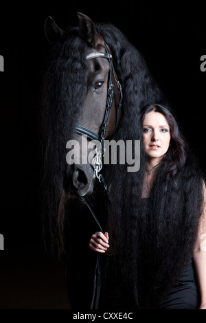 Friesian or Frisian horse breed with young woman wrapped in its long mane, gelding, black horse - Stock Photo