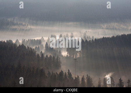 Fog over a forest in the morning light, Black Forest mountain range, Breisgau-Hochschwarzwald district, Baden-Wuerttemberg - Stock Photo