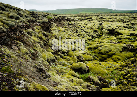 Moss-covered lava field of Eldhraun, Suðurland, Southern Iceland, Iceland, Europe - Stock Photo