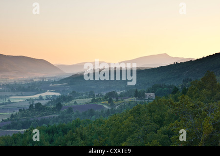 Fields of lavender near to Sault in Provence at dawn. - Stock Photo