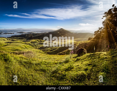 Sheep grazing meadows in raking light, sun rays of the warm morning sun, Hoopers Inlet Bay, Otago Peninsula, South - Stock Photo