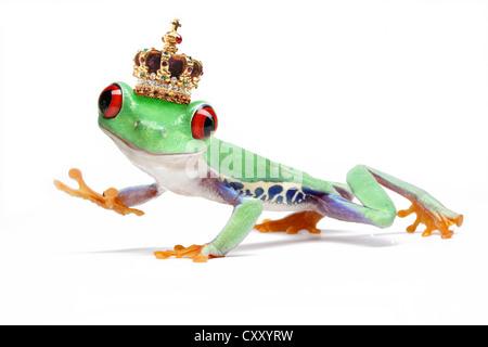 Waving Red-eyed Tree Frog (Agalychnis callidryas) wearing a crown - Stock Photo
