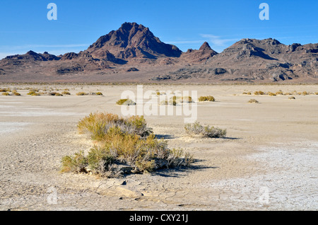 Salt flats at the Bonneville Speedway, Great Salt Lake Desert, Silver Island Mountains at back, Wendover, Utah, - Stock Photo