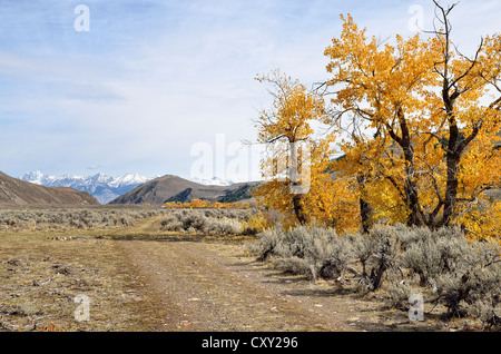 Roadway with autumnal coloured trees in the Big Lost River Valley, Lost River Range at back, Mackay, Idaho, USA - Stock Photo