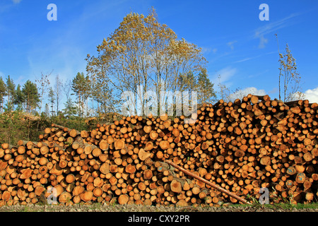 Large pile of wooden logs by forest clearcut in autumn. - Stock Photo