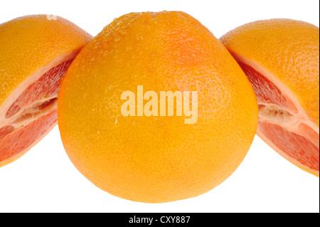 Grapefruit on white background - Stock Photo