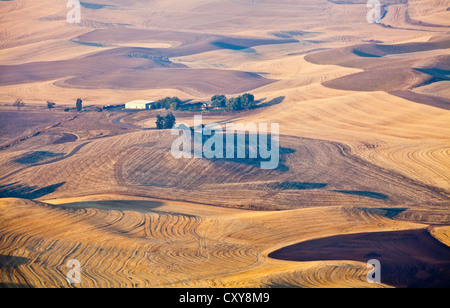 Dawn light over the Palouse  farmland from Steptoe Butte Washington State USA - Stock Photo
