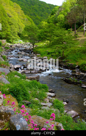 Lynmouth to Watersmeet walk along the River Lyn in Devon England. - Stock Photo