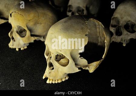 Skulls of murdered Tutsis during the genocide of 1994, Kigali Memorial Centre, genocide museum of Kigali, Rwanda, - Stock Photo