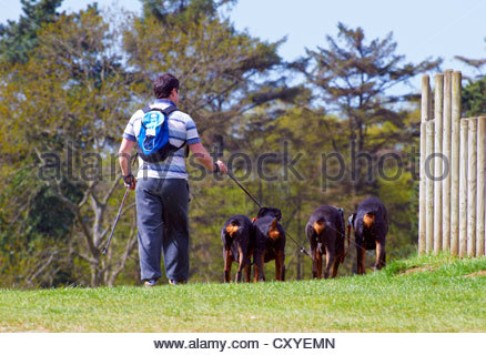 adult male with backpack walking with four doberman dogs covered in mayflies on a lead in the countryside - Stock Photo