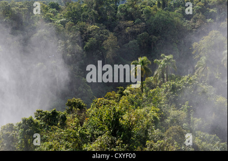 Spray covering the rain forest, Iguazu or Iguacu Falls, UNESCO World Heritage Site, at the border of Brazil and Argentina