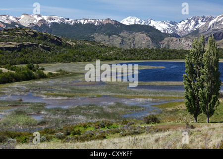 Poplar trees in the wind in front of the Chilean Andes on the Rio Chacabuco, Cochrane, Region de Aysen, Patagonia, - Stock Photo