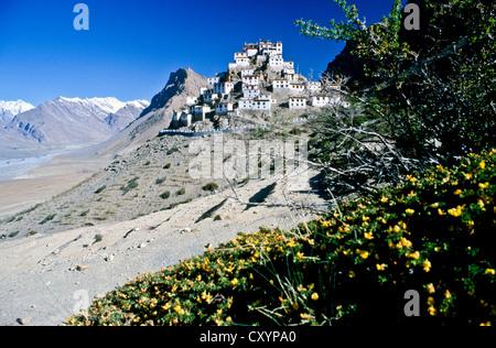 Key, Ki, Kye or Kee Gompa, a Tibetan Buddhist monastery, Spiti, Himachal Pradesh, India, Asia - Stock Photo
