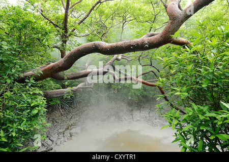 Hot mud springs, Rincon de la Vieja National Park, Guanacaste, Costa Rica, South America - Stock Photo