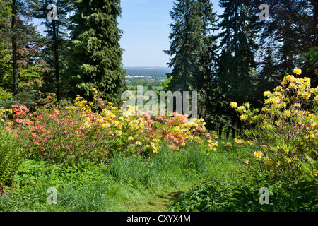 Path through flowering rhododendron, Hutberg, the town of Kamenz at the back, Saxony - Stock Photo
