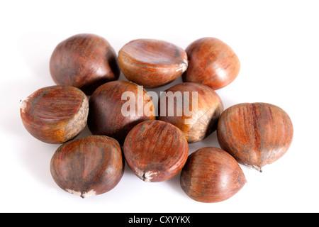 Chestnut (Castanea sativa) on white background - Stock Photo