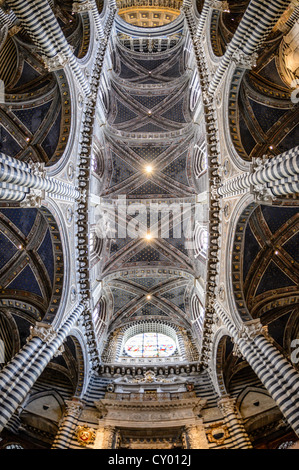 Interior view, ceiling of the Cathedral of Siena, Cattedrale di Santa Maria Assunta, main church of the city of Siena, Tuscany