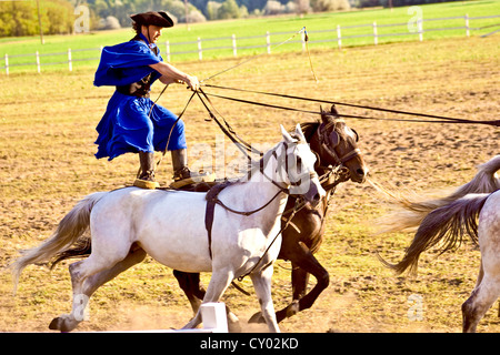 Hungary, Kalocsa, Csikos Hungarian horse rider, riding his team while standing - Stock Photo