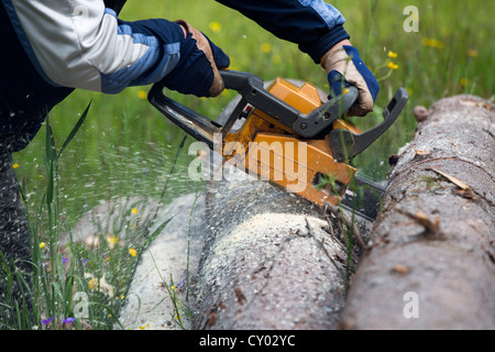 Elderly man cutting a spruce log with chainsaw - Stock Photo