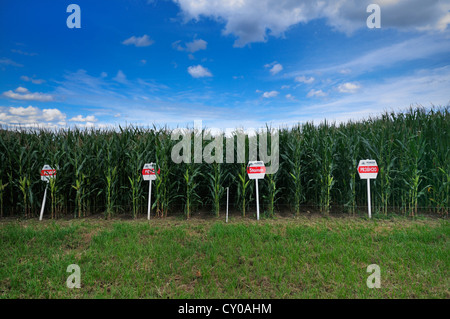 Corn field, test field with experimental plant varieties from the Pioneer company for biogas plants, renewable resources - Stock Photo