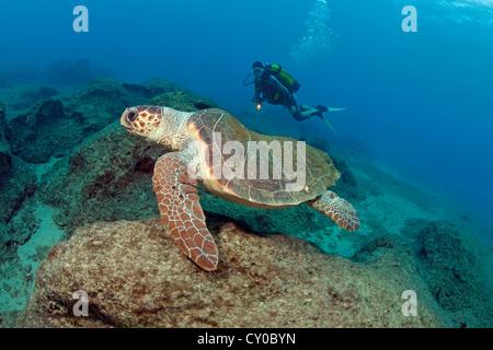 Loggerhead Turtle (Caretta caretta) and a scuba diver, Kas, Lycia, Turkey, Mediterranean - Stock Photo