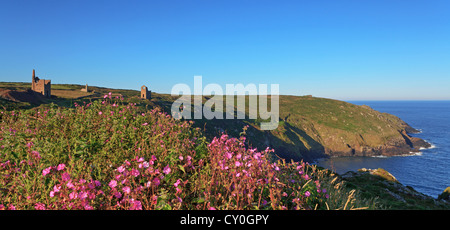 Wheal Owles tin mines in Cornwall England taken from tghe Botallack side at dawn on a beautiful sunny day with clear - Stock Photo