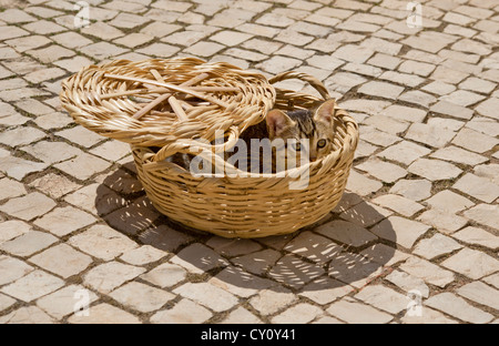 a kitten hiding in a basket on a cobbled terrace in the Algarve, Portugal - Stock Photo