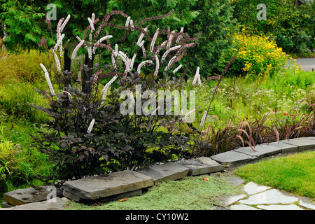 Naturalized garden in late summer- Bugbane and stone wall, Greater Sudbury, Ontario, Canada - Stock Photo