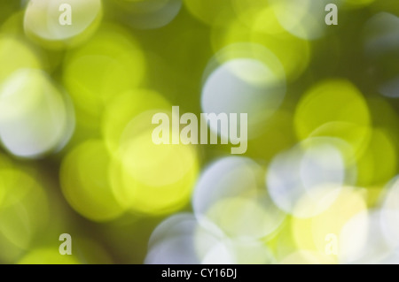 blurred green and white circle - Stock Photo