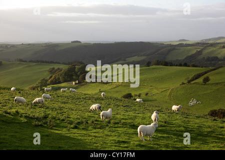 Landscape near Aberystwyth , Ceredigion, Wales UK. - Stock Photo