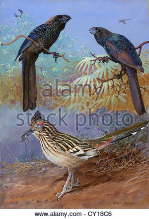 A painting of a smooth-billed ani, groove-billed ani and a roadrunner. - Stock Photo