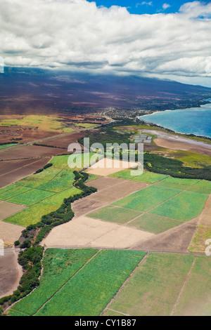 Sugar Cane Fields, Maui, Hawaii, USA - Stock Photo