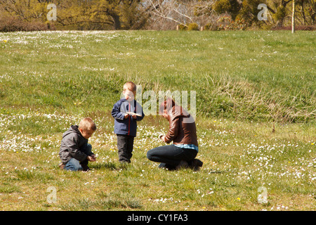 Mother with two sons (3-5) picking flowers in meadow, France. - Stock Photo