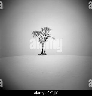 Lone tree in desert like environment - Stock Photo