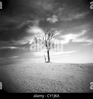 Lone tree in a barren landscape under warm sky - Stock Photo