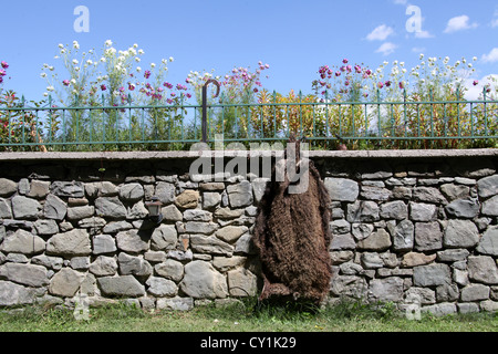 Wild Boar Skin on Display in a Restaurant Garden in Albania - Stock Photo