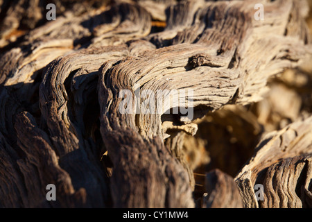 sossusvlei (dead valley) in Namib-Naukluft Park, Namibia - Stock Photo