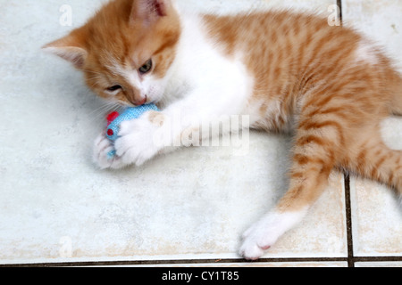 Ginger And White Kitten Playing With Toy Mouse