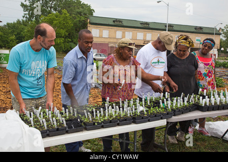 Detroit residents select seedlings to grow in their gardens. The seedlings were distributed at an urban farm in - Stock Photo