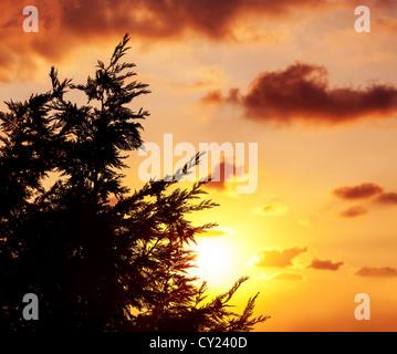 Photo of spruce tree silhouette over beautiful orange sunset, evergreen wood over sundown, fir forest, majestic - Stock Photo